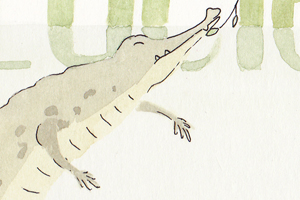 illustration crocodile